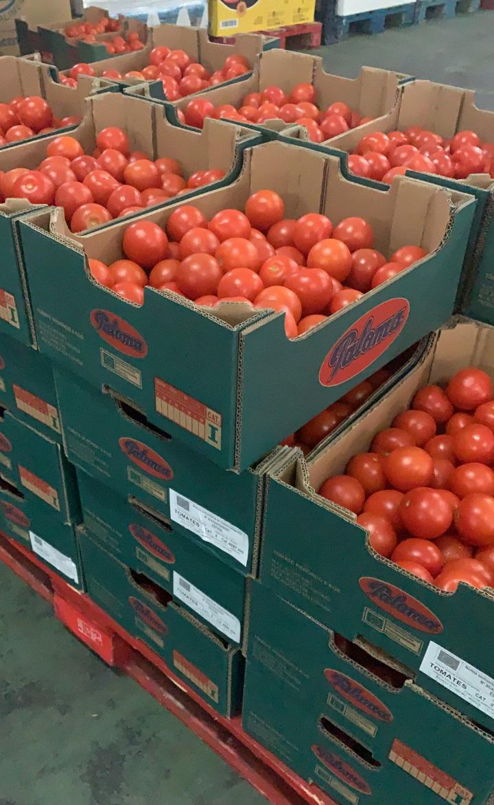 Reparto de tomates del programa Fega